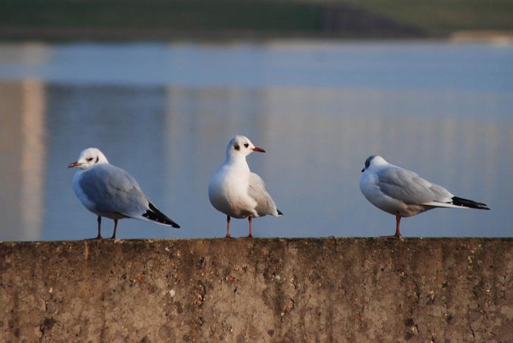 Oiseaux à Voisins