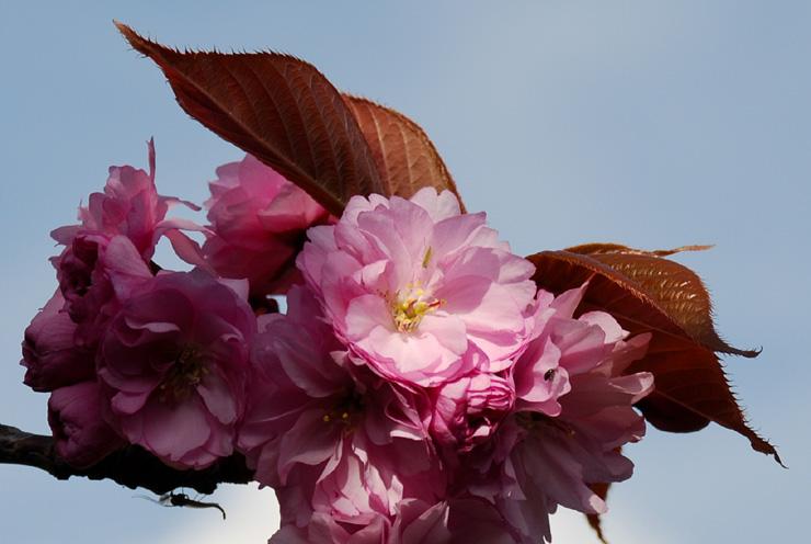 Le printemps est en progrès