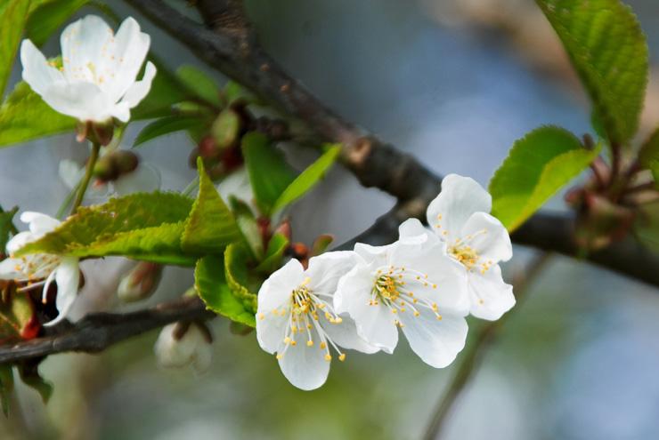 Promesses du printemps
