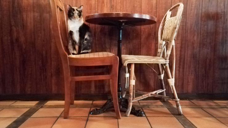 Chat sur un siège