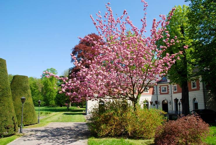 Le printemps à Chartrettes