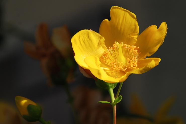 Soleil fleural