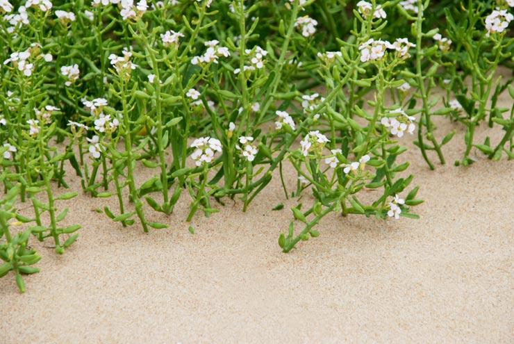 Plante sur du sable