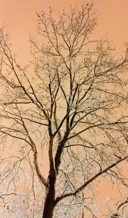 L'hiver les arbres sont en bois