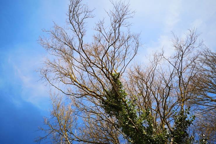 Du vent dans les branches de sassafras