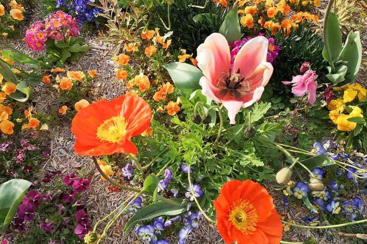 Fleurs en face de chez moi