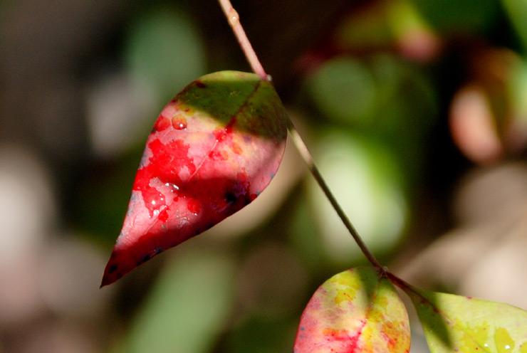 Même les feuilles pleurent