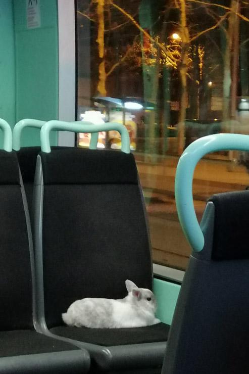 Suis le lapin blanc.